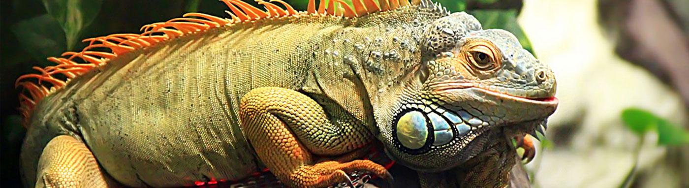 Reptile Supplies